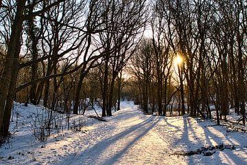 Landschaft Schnee in den Wäldern von Wendy Tellier - Vastenhouw