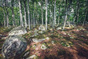 Waldspaziergang in Schweden