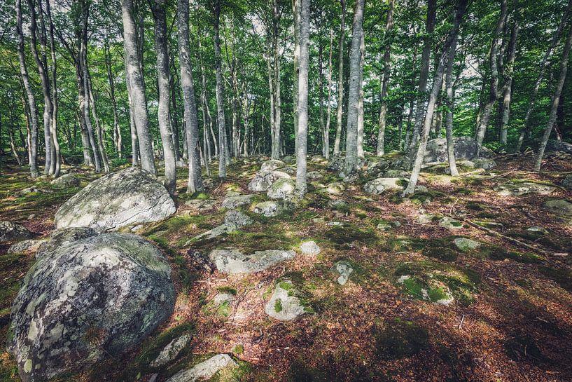 Waldspaziergang in Schweden von Skyze Photography by André Stein