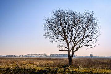 Nackter Baum in einer leeren Landschaft von Ruud Morijn