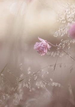 Blumen Teil 138 von Tania Perneel