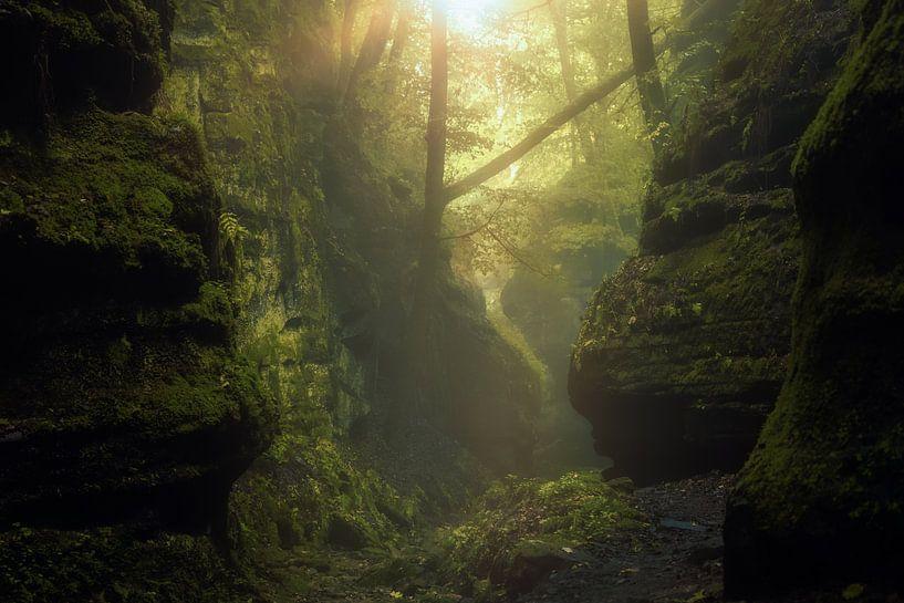 Die kleine neblige Schweiz in Luxemburg von Arjen Roos