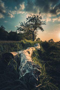 Avondsfeer in de Rieselfelder van Steffen Peters