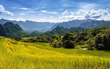 Rizières en terrasses Pu Luong sur Jeroen Mikkers