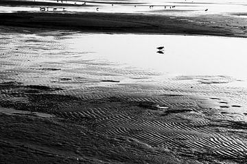 Watvögel auf Wattenmeer von Jan Brons