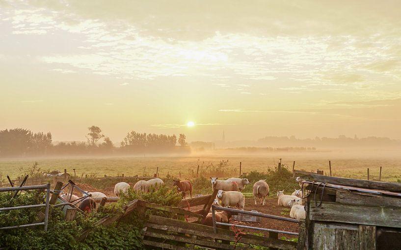 Landschap met schapen van Dirk van Egmond