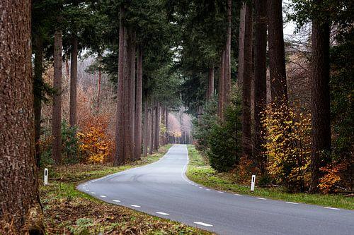Bosweg Speulderbos
