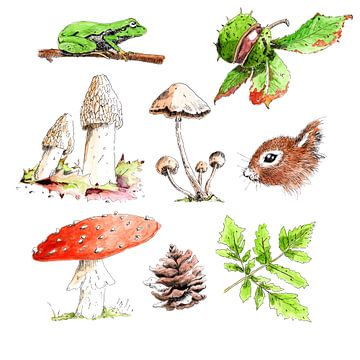 Illustratie van objecten in het bos