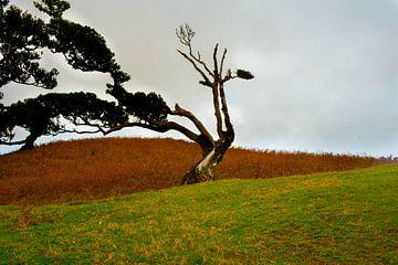 Kahler Baum auf Madeira von jonathan Le Blanc