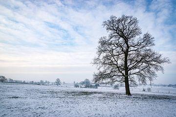 Limburgs Winterlandschaft mit einsamen Bäumen von Gijs Rijsdijk