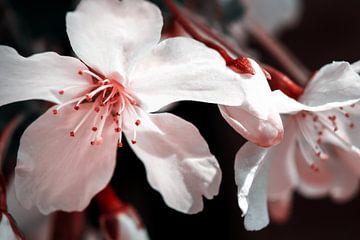 Weißen Blüten sur Nannie van der Wal