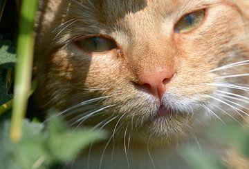 Rote Katze von A'da de Bruin