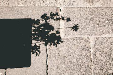 Schattenpflanze van Sebastian Schimmel