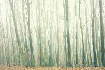 Nebelwald von Dorit Fuhg