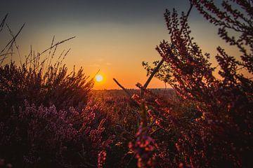 Zonsondergang op een veld vol heide van Stedom Fotografie