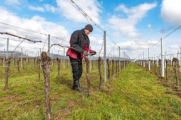 Veldarbeider in de wijngaard