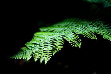 Jungle plant licht op in het zonlicht