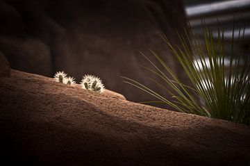 Cactus landscape van
