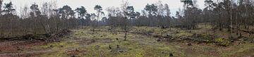 Panorama van de Herpse Bossen von Wouter Bos