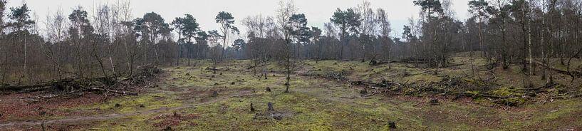 Panorama van de Herpse Bossen van Wouter Bos