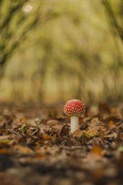 Jonge vliegenzwam - paddenstoel rood met witte stippen van Moetwil en van Dijk - Fotografie
