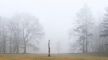Stam van een berkenboom in de mist van Jenco van Zalk