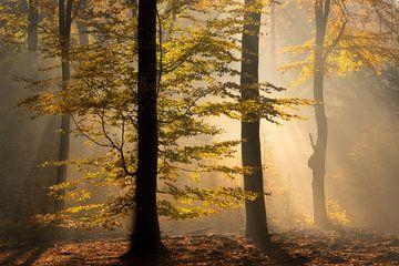 Baum im Herbst von Edwin Mooijaart