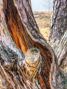 Holle boom op Heidestein van Ron van Ewijk