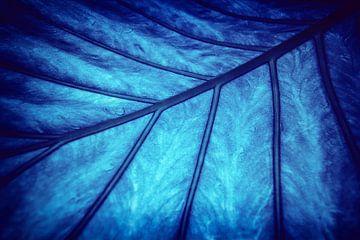 Blad - Blauw van Jacqueline Lemmens