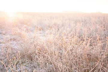 Zonlicht in het veld | Zacht licht | In het weiland van Wendy Boon