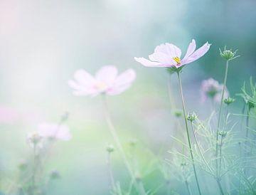Bloemenveld van