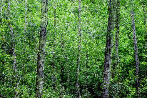 Bosque van
