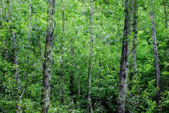 Bosque van Mahandeep Singh