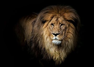 Porträt eines Löwen von Diana van Tankeren