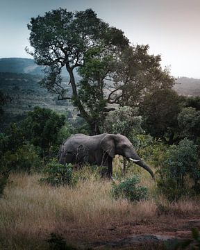 Olifant in het Kruger Park, Zuid-Afrika van Harmen van der Vaart