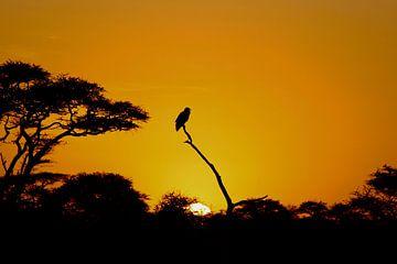 Het aanbreken van een nieuwe dag op de Serengeti - Zonsopgang van
