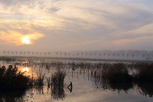 Landschap met zonsopkomst bij park Lingezegen Arnhem Elst