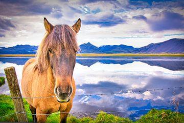 Icelandic horse von Niels Hemmeryckx