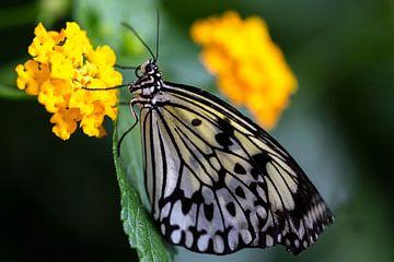 Vlinder von Marielle Govers