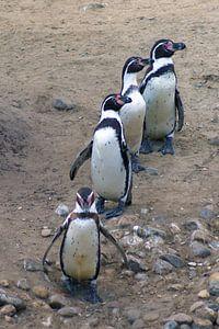 Rij pinguïns