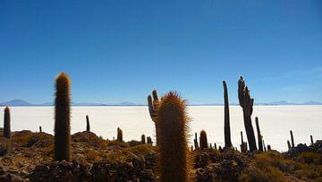 'Cactussen', Bolivia van Martine Joanne