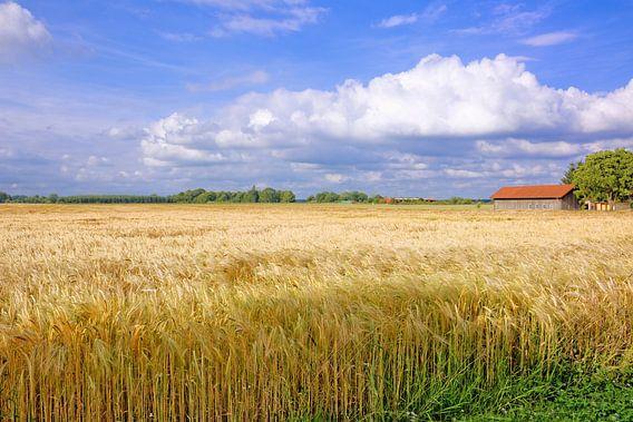 Wide Grainfield