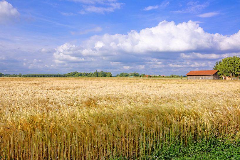 Wide Grainfield van Gisela Scheffbuch