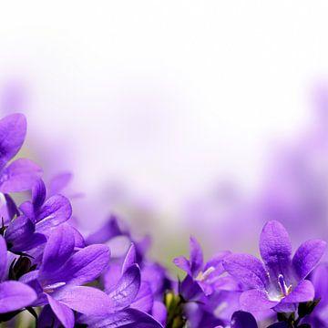 Close-up Foto Van Paarse Campanula Bloemen van Diana van Tankeren