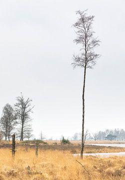 Bos Dwingelderveld - Dwingeloo (Nederland) van Marcel Kerdijk