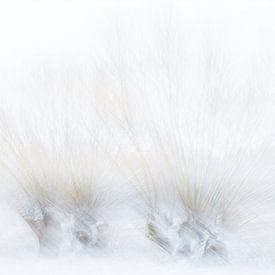 Winter van Ingrid Van Damme fotografie