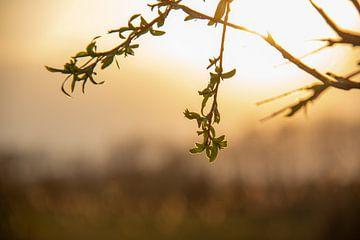 Untergehende Sonne von Rianne Fotografeert