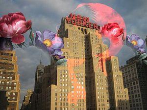 Blühender New Yorker von Rudy en Gisela Schlechter