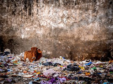 Heilige Kuh auf Müllhalde in Pushkar Indien von Rik Pijnenburg