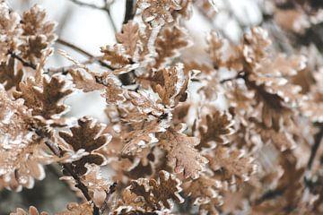 bladeren bevroren van Robin van Maanen